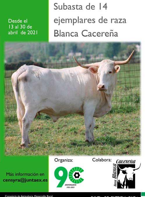 SUBASTA DE BLANCA CACEREÑA